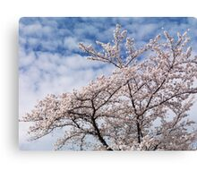 Cherry tree blossom over blue sky art photo print Canvas Print