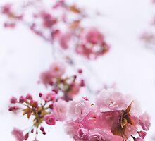 Closeup of pink cherry blossom art photo print by ArtNudePhotos