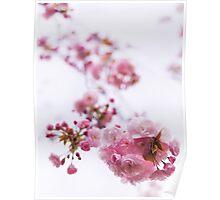 Closeup of pink cherry blossom art photo print Poster