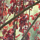 Red Leaves by Joan Wild