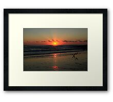 Seagulls Landing At Dawn Framed Print