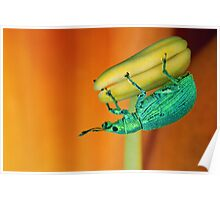 Tiny weevil Poster