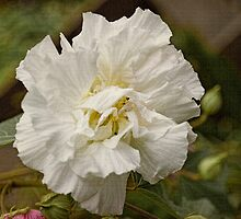 Rose of Sharon #4 by Elaine Teague