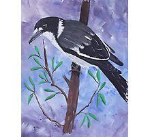 'BUTCHER BIRD' Photographic Print
