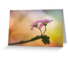 Bathing in sultry evening light Greeting Card