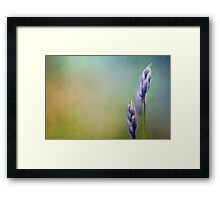 There were lots of them.... but not all so beautiful... Framed Print