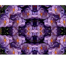 Kaleidoscopic Garden 31 Photographic Print