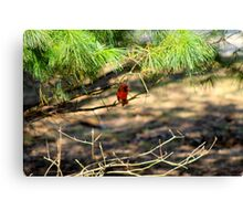 Red Cardinal 6 Canvas Print
