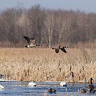 Spring Migration At The Marsh by Thomas Young