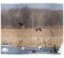 Spring Migration At The Marsh Poster