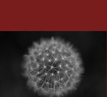 Dandelion Clock 2 by Katja Heber