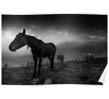 Brumbies in the Mist - monochrome Poster