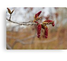 Bright Red New Life in the Forest Canvas Print