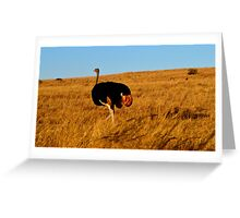 Ostrich Wandering The South Africa Plains Greeting Card