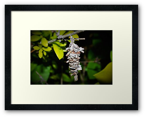 Bagworm cocoon by ♥⊱ B. Randi Bailey