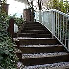 Up steps path with cherry flower petals falling all over. South Surrey, BC, Canada by naturematters