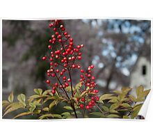 spring bush with red fruits. plant nature photography. Poster