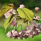 Spring by shalisa