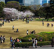 Japan Sakura - Tokyo imperial palace garden by Quentin Jarc