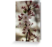 Japan Sakura - Somei Yoshino Greeting Card