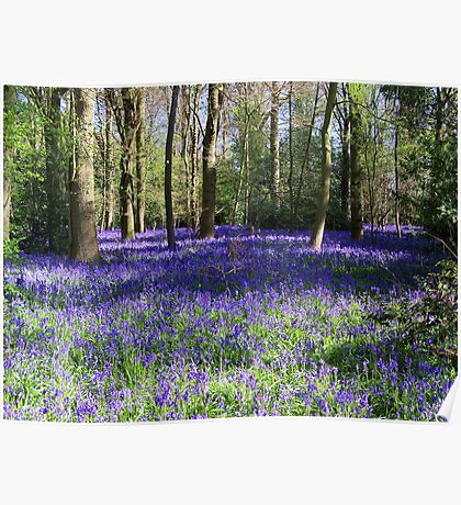 Inside a Bluebell Wood Poster