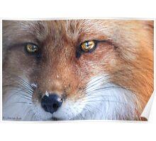 The Fox - Le Renard ..sans Le Corbeau  Poster