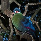 Green Turaco (Tauraco persa) by Warren. A. Williams