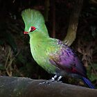 Buffoni Green Turaco  (Tauraco persa buffoni) by Warren. A. Williams