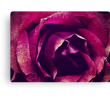 name of the rose Canvas Print