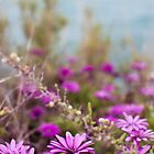 Algarve's Flowers by Mylla Ghdv