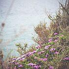 Algarve's Flowers by Mylla Ghdv