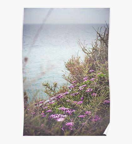 Algarve's Flowers Poster