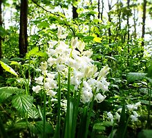 Rare 'White' Bluebells by Ludwig Wagner