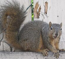 Mother Squirrel waiting for sunflower seeds by justcruzin