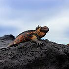 Colorful Marine Iguana In The Galapagos by Al Bourassa