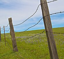A Fence in the Foothills by John Butler