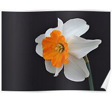 One Daffodil Poster