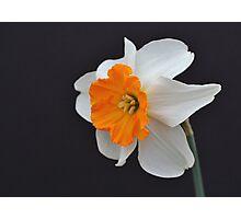 One Daffodil Photographic Print