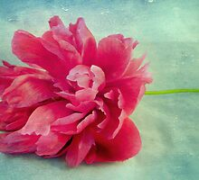 Peony On Blue by AllyNCoxon