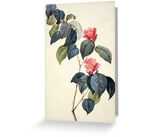 Camellia Japonica Greeting Card