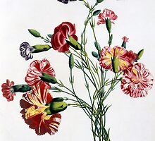Bouquet of Carnations by Bridgeman Art Library