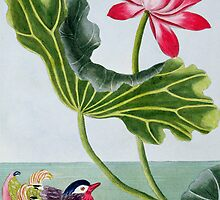 Chinese Red Water Lily by Bridgeman Art Library