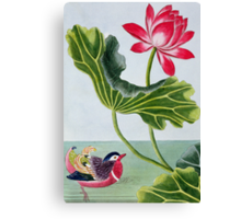 Chinese Red Water Lily Canvas Print