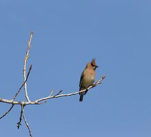 Alone On A Limb by Thomas Young