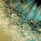 Delicious Dandy Drops by Sharon Johnstone