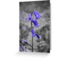 English Bluebell Greeting Card