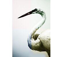 Quadrant Colour Bird Minimalist Modern Art Nature Photography Photographic Print
