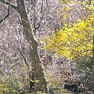 Spring Colors, Van Vorst Park, Jersey City, New Jersey by lenspiro