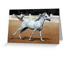 Arabian Horse Joy Portrait Greeting Card