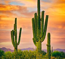 Arizona Life by Bo Insogna